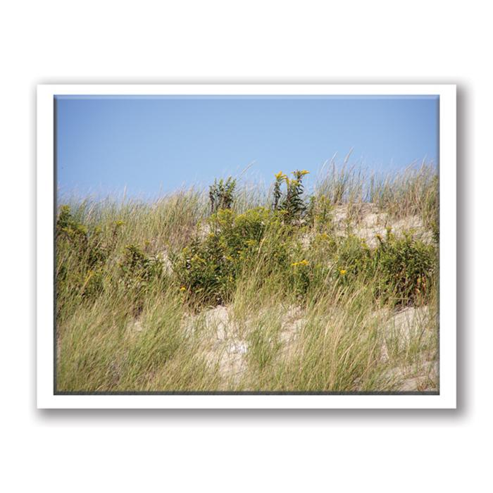 Photo Greeting Card Of Beach Dunes by Kurt Neumann